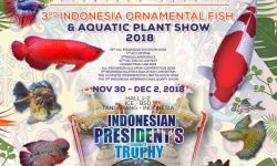 Indonesia to hold worlds biggest ornamental fish exhibition